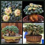Jewel Plant