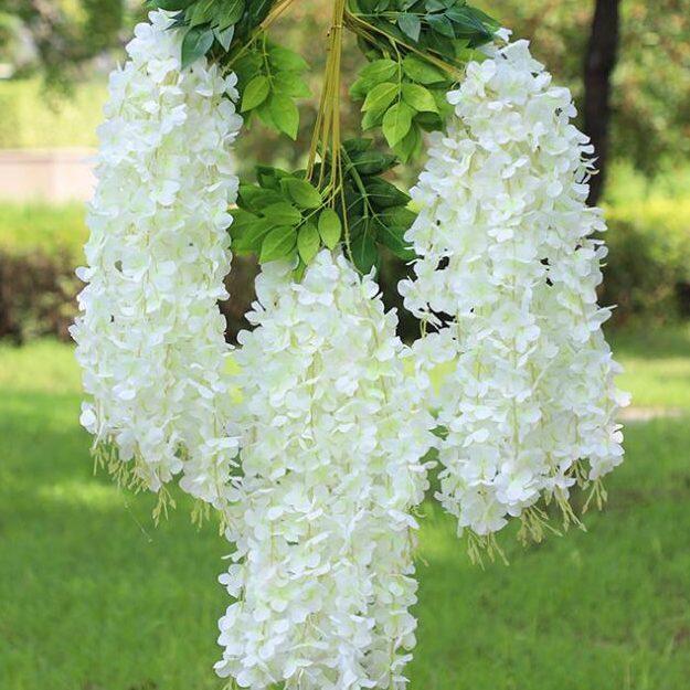 wisteria alba 07