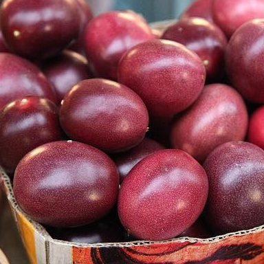 Passiflora Panama Red 05