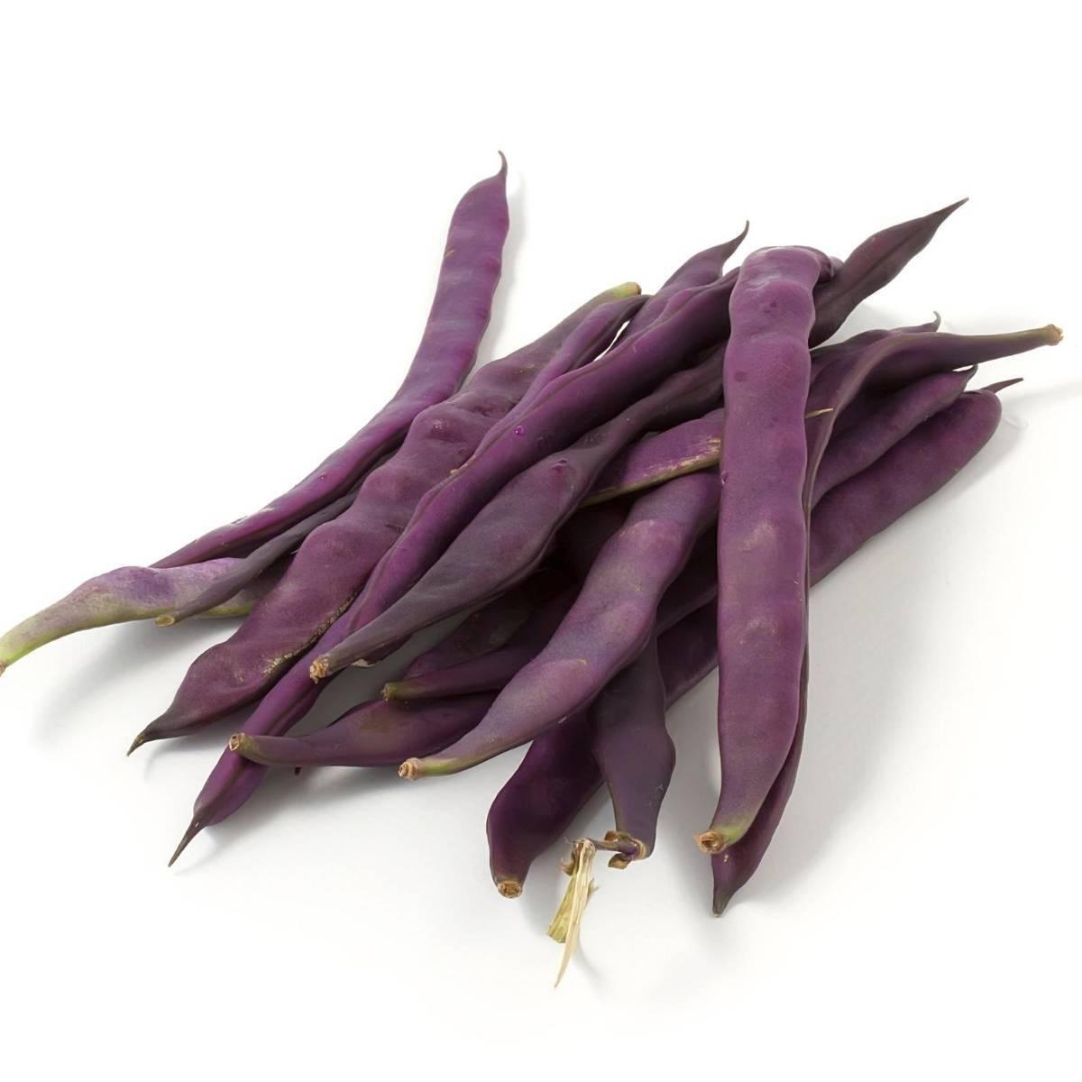 Bean Purple King 03